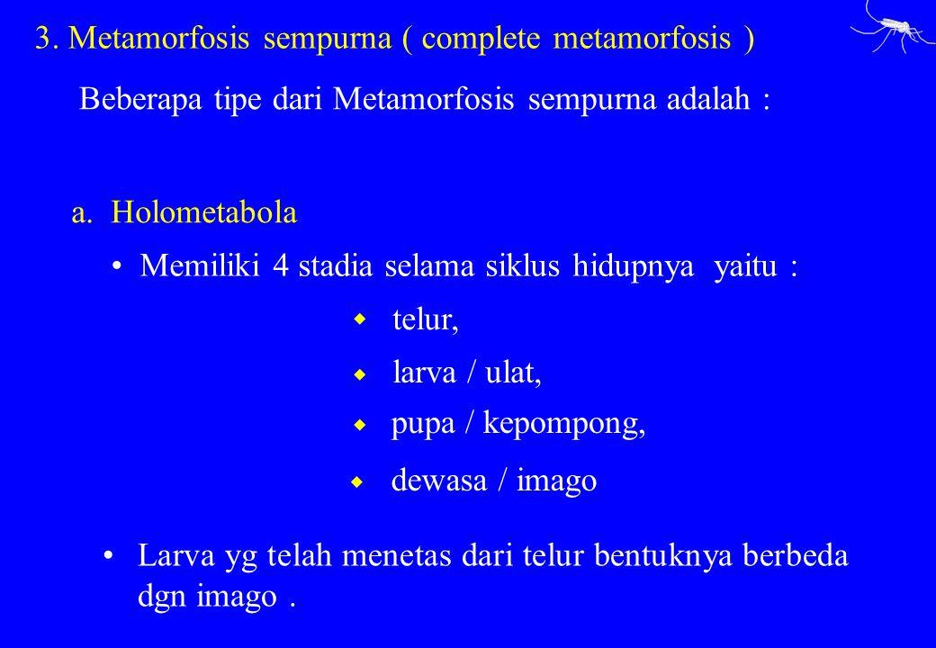 Beberapa tipe dari Metamorfosis sempurna adalah : a. Holometabola telur, Memiliki 4 stadia selama siklus hidupnya yaitu : Larva yg telah menetas dari