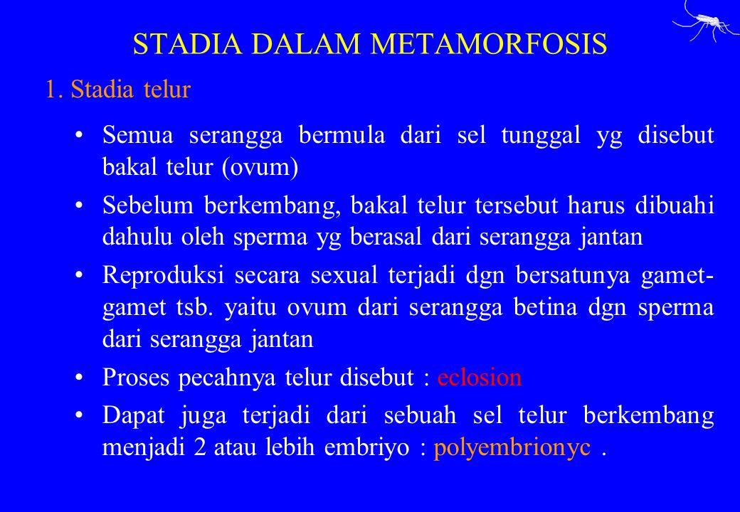 STADIA DALAM METAMORFOSIS 1. Stadia telur Semua serangga bermula dari sel tunggal yg disebut bakal telur (ovum) Sebelum berkembang, bakal telur terseb
