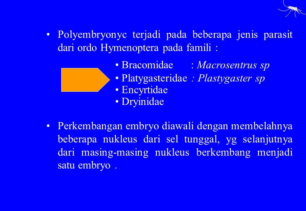 Polyembryonyc terjadi pada beberapa jenis parasit dari ordo Hymenoptera pada famili : Perkembangan embryo diawali dengan membelahnya beberapa nukleus