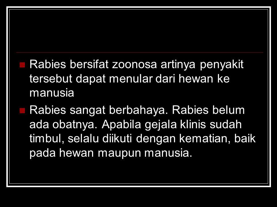 Rabies bersifat zoonosa artinya penyakit tersebut dapat menular dari hewan ke manusia Rabies sangat berbahaya. Rabies belum ada obatnya. Apabila gejal