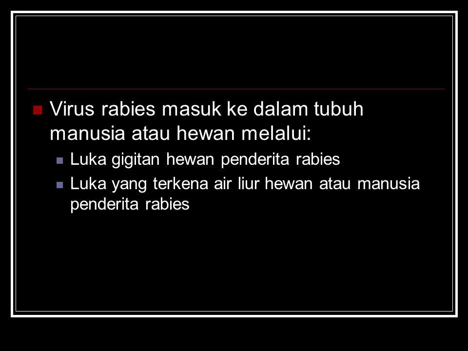 Virus rabies masuk ke dalam tubuh manusia atau hewan melalui: Luka gigitan hewan penderita rabies Luka yang terkena air liur hewan atau manusia pender