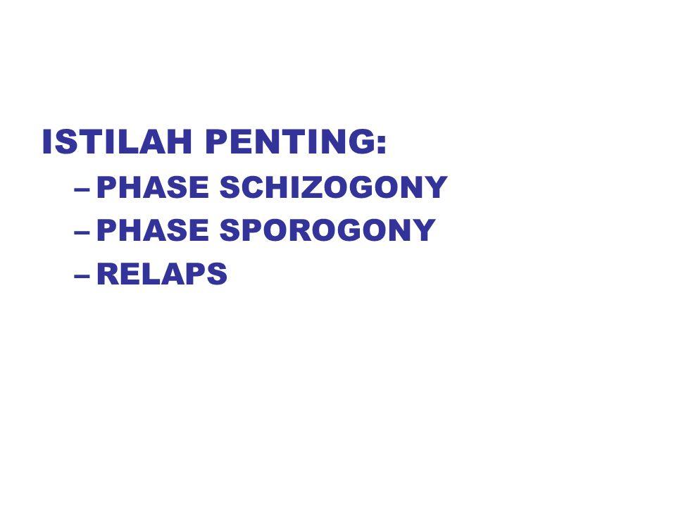 ISTILAH PENTING: –PHASE SCHIZOGONY –PHASE SPOROGONY –RELAPS