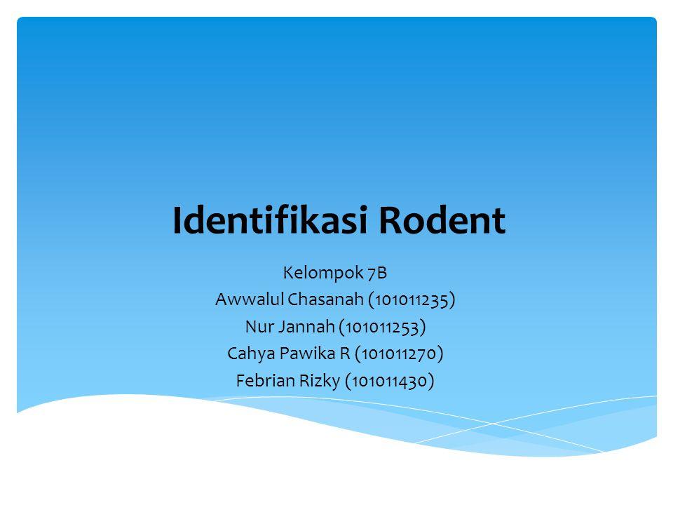 Identifikasi Rodent Kelompok 7B Awwalul Chasanah (101011235) Nur Jannah (101011253) Cahya Pawika R (101011270) Febrian Rizky (101011430)