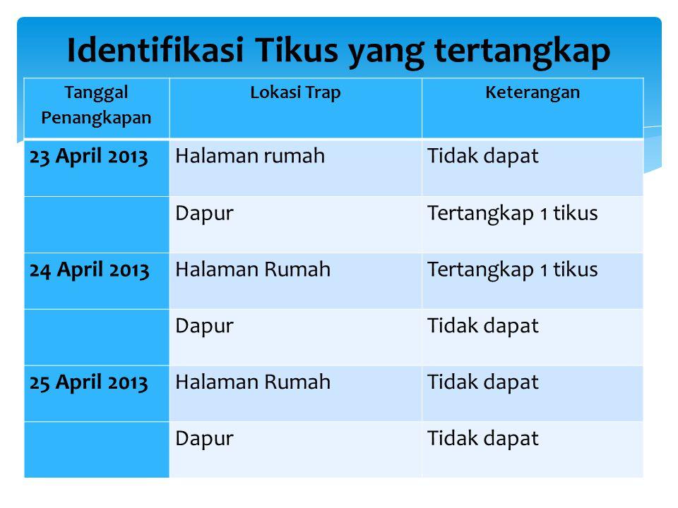 Tanggal Penangkapan Lokasi TrapKeterangan 23 April 2013Halaman rumahTidak dapat DapurTertangkap 1 tikus 24 April 2013Halaman RumahTertangkap 1 tikus D
