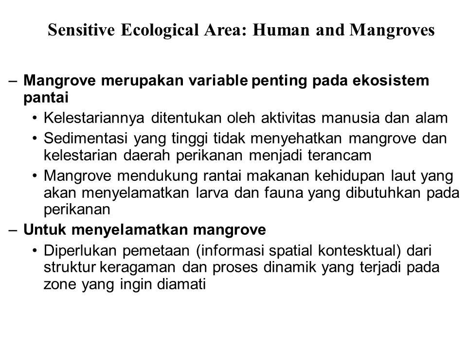 –Mangrove merupakan variable penting pada ekosistem pantai Kelestariannya ditentukan oleh aktivitas manusia dan alam Sedimentasi yang tinggi tidak men