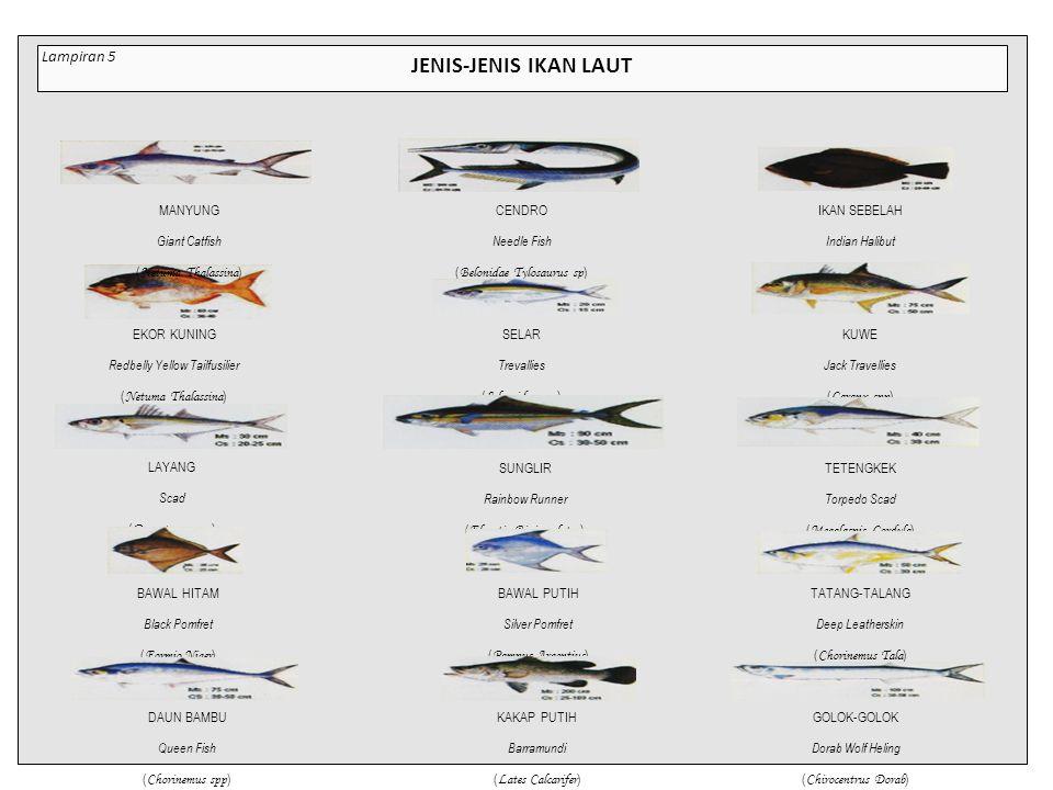 JENIS-JENIS IKAN LAUT CENDRO Needle Fish ( Belonidae Tylosaurus sp ) IKAN SEBELAH Indian Halibut ( Psettodidae ) EKOR KUNING Redbelly Yellow Tailfusilier ( Netuma Thalassina ) SELAR Trevallies ( Selaroides spp ) KUWE Jack Travellies ( Caranx spp ) DAUN BAMBU Queen Fish ( Chorinemus spp ) SUNGLIR Rainbow Runner ( Elegatis Bipinnulatus ) TETENGKEK Torpedo Scad ( Megalaspis Cordyla ) BAWAL HITAM Black Pomfret ( Formio Niger ) BAWAL PUTIH Silver Pomfret ( Pampus Argentius ) TATANG-TALANG Deep Leatherskin ( Chorinemus Tala ) LAYANG Scad ( Decapterus spp ) KAKAP PUTIH Barramundi ( Lates Calcarifer ) GOLOK-GOLOK Dorab Wolf Heling ( Chirocentrus Dorab ) MANYUNG Giant Catfish ( Netuma Thalassina ) Lampiran 5