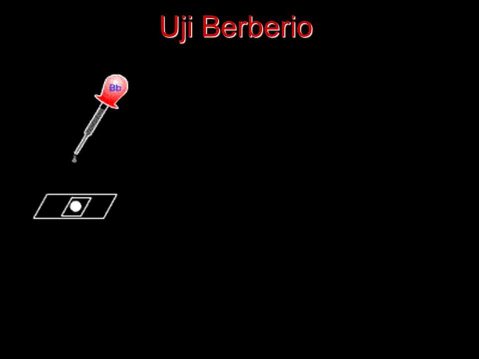 Uji Berberio