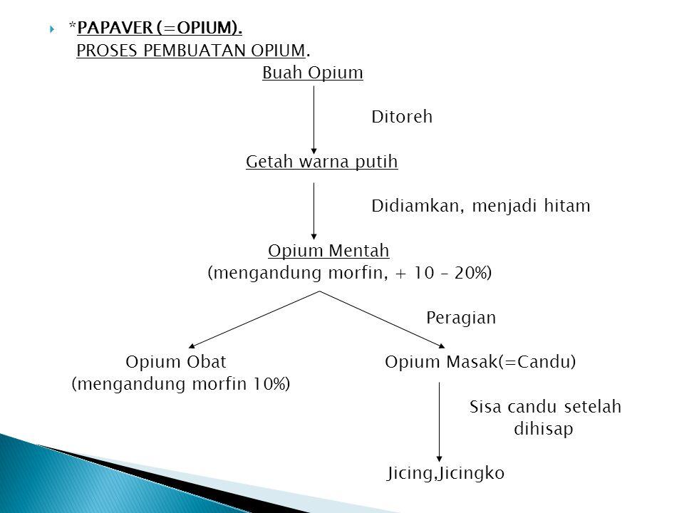  *PAPAVER (=OPIUM). PROSES PEMBUATAN OPIUM. Buah Opium Ditoreh Getah warna putih Didiamkan, menjadi hitam Opium Mentah (mengandung morfin, + 10 – 20%