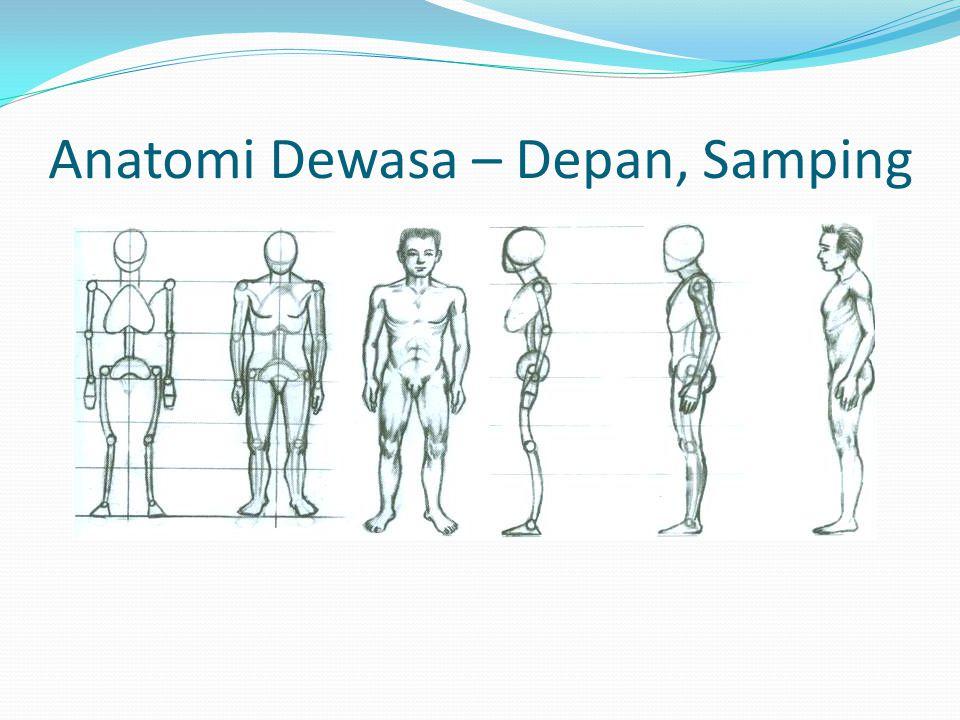 Anatomi Dewasa – Depan, Samping