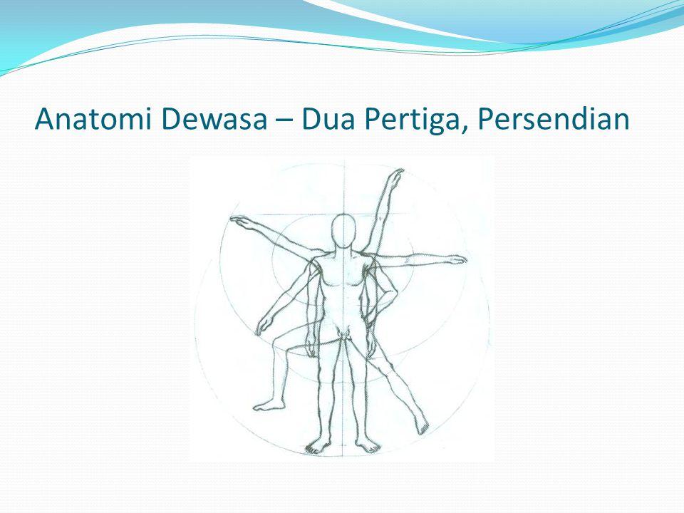 Anatomi Dewasa – Dua Pertiga, Persendian