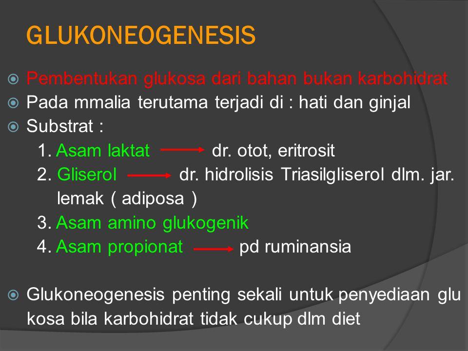 GLUKONEOGENESIS  Pembentukan glukosa dari bahan bukan karbohidrat  Pada mmalia terutama terjadi di : hati dan ginjal  Substrat : 1.