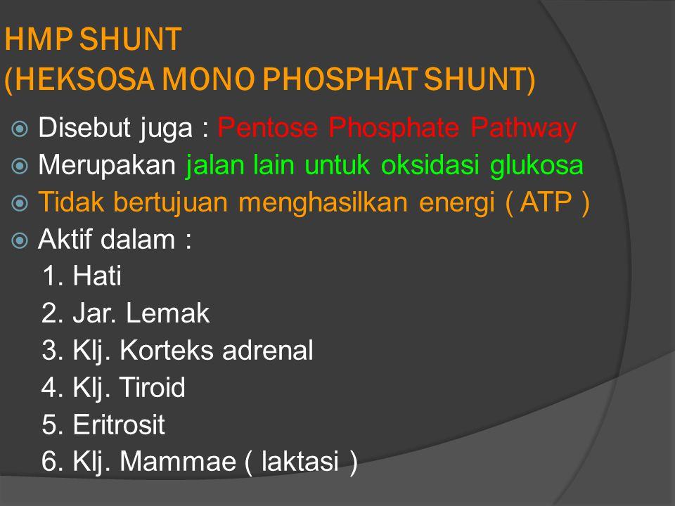 HMP SHUNT (HEKSOSA MONO PHOSPHAT SHUNT)  Disebut juga : Pentose Phosphate Pathway  Merupakan jalan lain untuk oksidasi glukosa  Tidak bertujuan menghasilkan energi ( ATP )  Aktif dalam : 1.