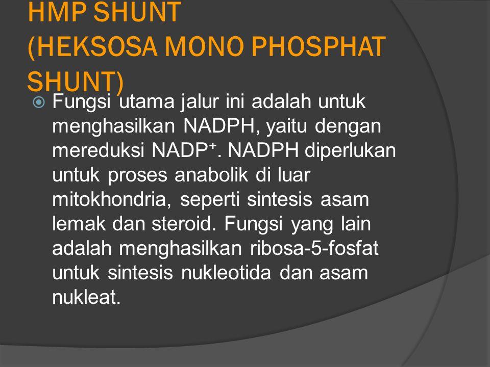 HMP SHUNT (HEKSOSA MONO PHOSPHAT SHUNT)  Fungsi utama jalur ini adalah untuk menghasilkan NADPH, yaitu dengan mereduksi NADP +.
