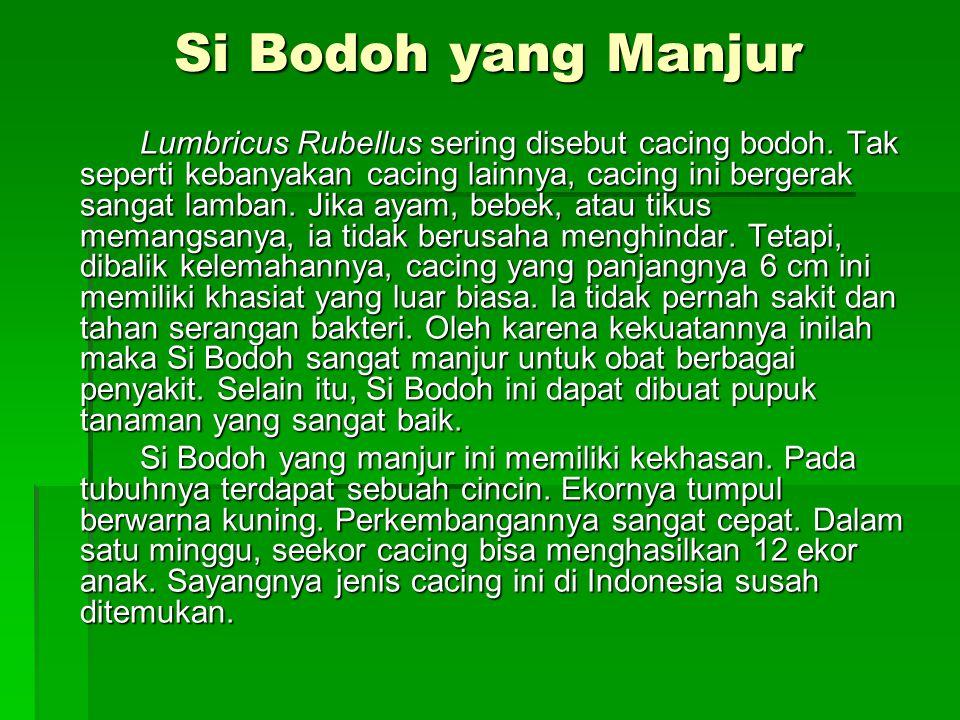 Si Bodoh yang Manjur Lumbricus Rubellus sering disebut cacing bodoh. Tak seperti kebanyakan cacing lainnya, cacing ini bergerak sangat lamban. Jika ay