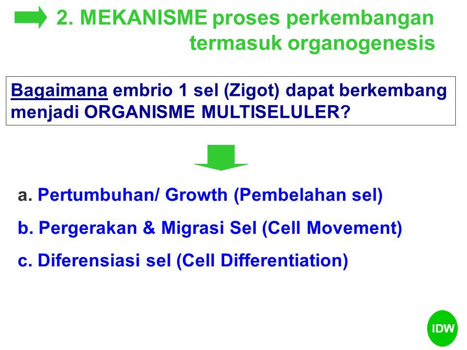Bagaimana embrio 1 sel (Zigot) dapat berkembang menjadi ORGANISME MULTISELULER? 2. MEKANISME proses perkembangan termasuk organogenesis a. Pertumbuhan