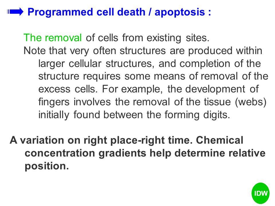 Programmed cell death / apoptosis : The removal of cells from existing sites. Note that very often structures are produced within larger cellular stru