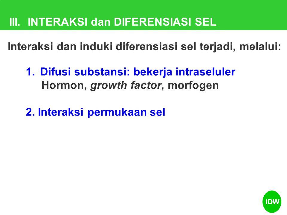 III. INTERAKSI dan DIFERENSIASI SEL 1.Difusi substansi: bekerja intraseluler Hormon, growth factor, morfogen 2. Interaksi permukaan sel Interaksi dan