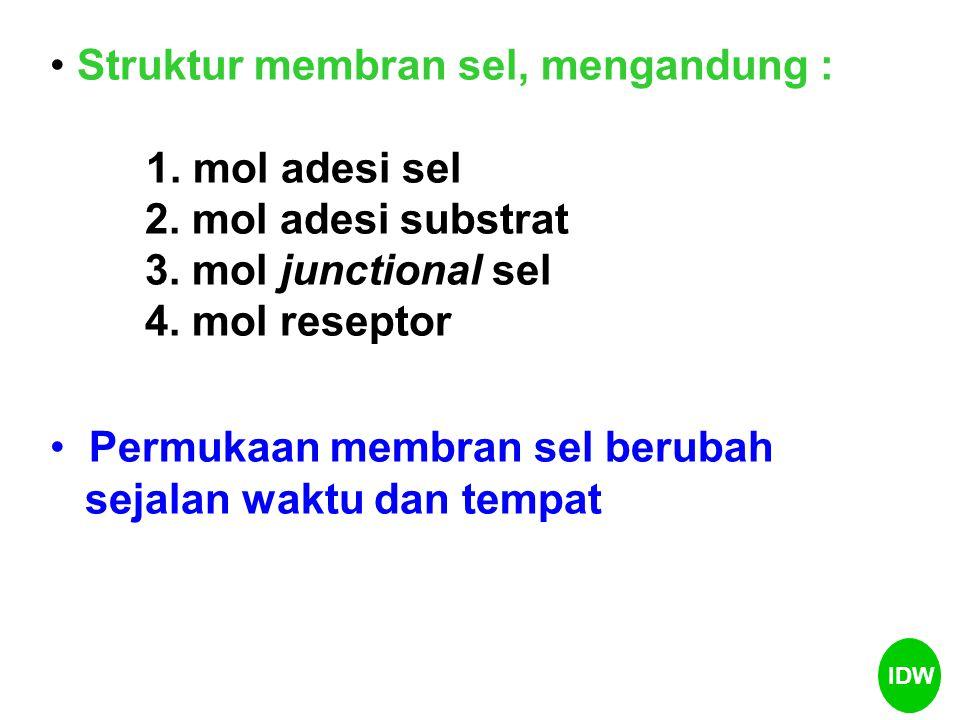 Struktur membran sel, mengandung : 1. mol adesi sel 2. mol adesi substrat 3. mol junctional sel 4. mol reseptor Permukaan membran sel berubah sejalan