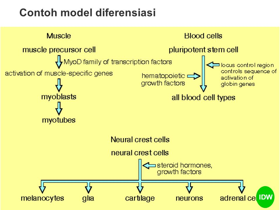 Contoh model diferensiasi IDW