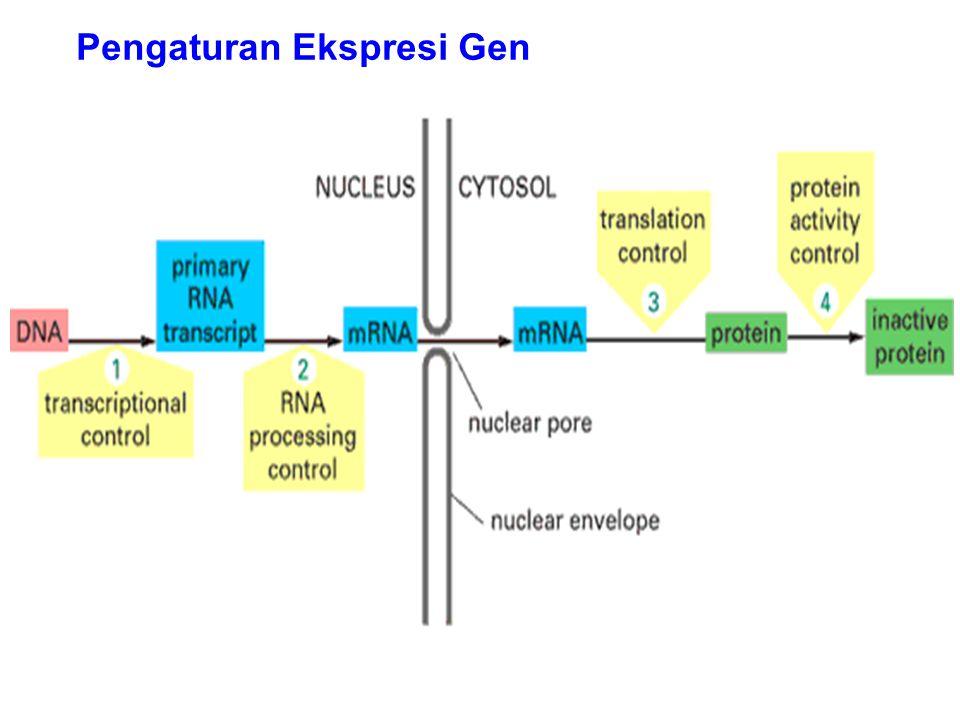Pengaturan Ekspresi Gen