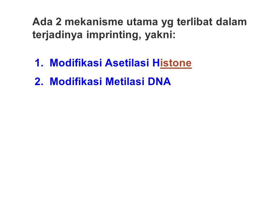 1. Modifikasi Asetilasi Histoneistone 2. Modifikasi Metilasi DNA Ada 2 mekanisme utama yg terlibat dalam terjadinya imprinting, yakni: