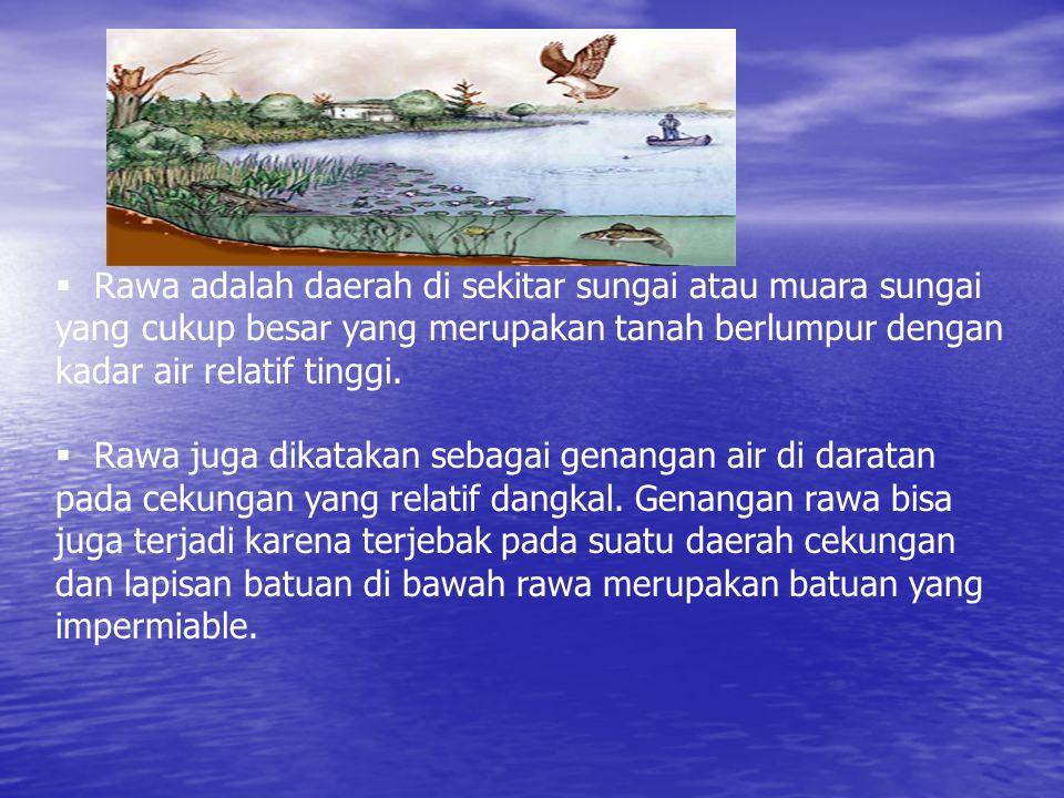  Rawa adalah daerah di sekitar sungai atau muara sungai yang cukup besar yang merupakan tanah berlumpur dengan kadar air relatif tinggi.
