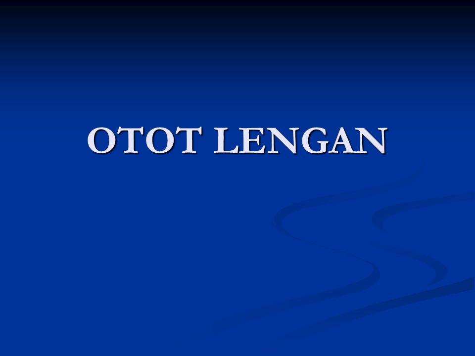 REGIO BRACHII (LENGAN ATAS) Bgn Anterior Bgn Anterior 1.