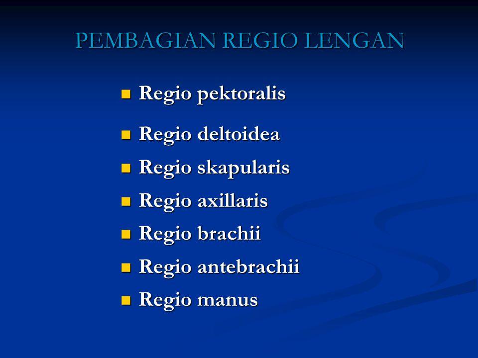 PEMBAGIAN REGIO LENGAN Regio pektoralis Regio pektoralis Regio deltoidea Regio deltoidea Regio skapularis Regio skapularis Regio axillaris Regio axill