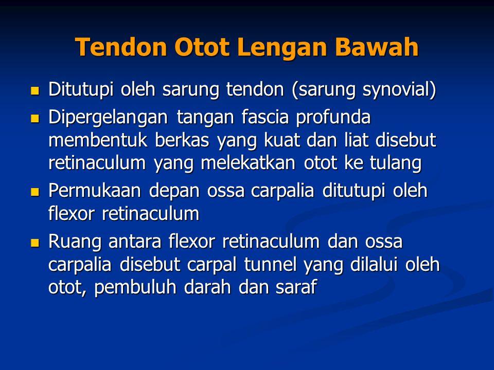 Tendon Otot Lengan Bawah Ditutupi oleh sarung tendon (sarung synovial) Ditutupi oleh sarung tendon (sarung synovial) Dipergelangan tangan fascia profu