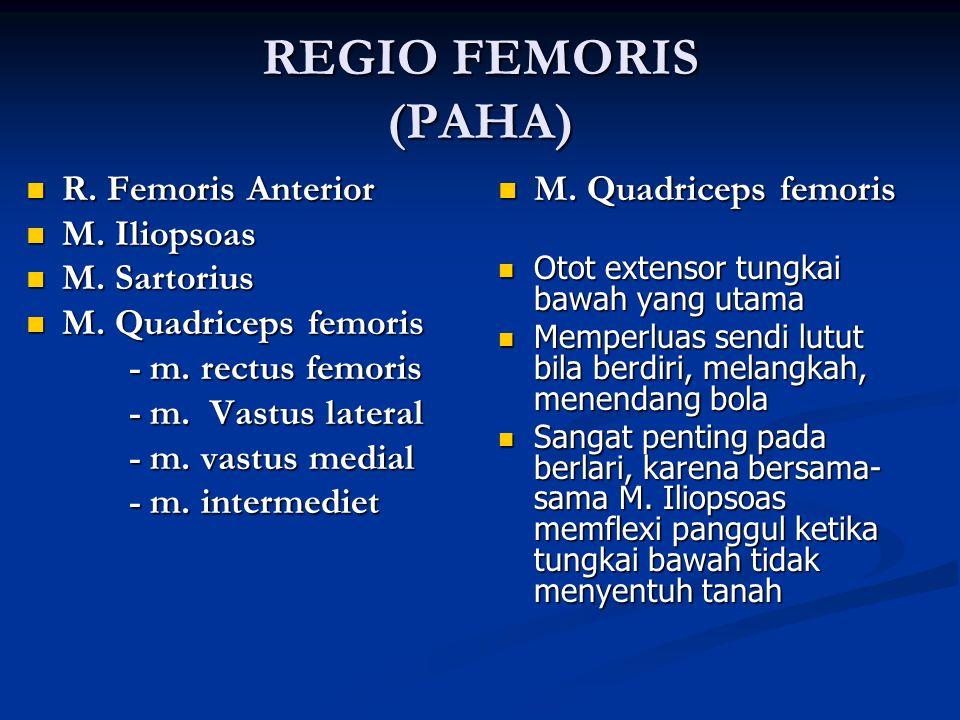 REGIO FEMORIS (PAHA) R. Femoris Anterior R. Femoris Anterior M. Iliopsoas M. Iliopsoas M. Sartorius M. Sartorius M. Quadriceps femoris M. Quadriceps f