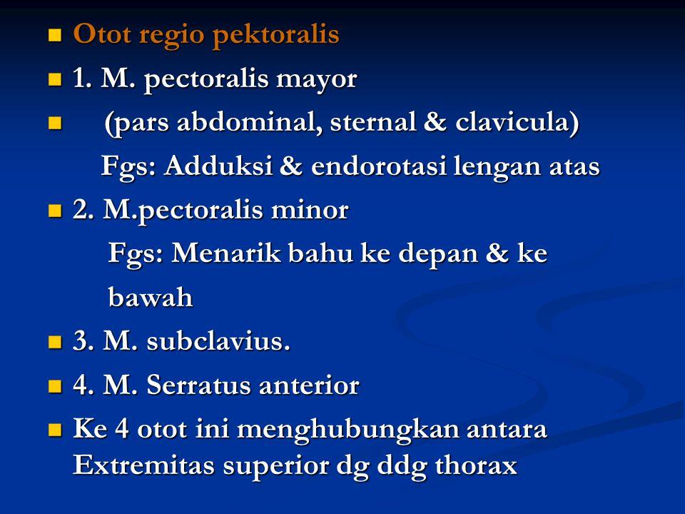 Otot regio pektoralis Otot regio pektoralis 1. M. pectoralis mayor 1. M. pectoralis mayor (pars abdominal, sternal & clavicula) (pars abdominal, stern