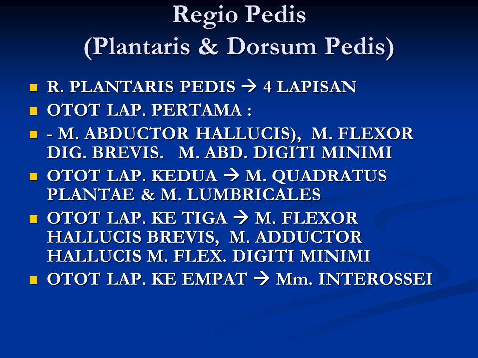 Regio Pedis (Plantaris & Dorsum Pedis) R. PLANTARIS PEDIS  4 LAPISAN R. PLANTARIS PEDIS  4 LAPISAN OTOT LAP. PERTAMA : OTOT LAP. PERTAMA : - M. ABDU