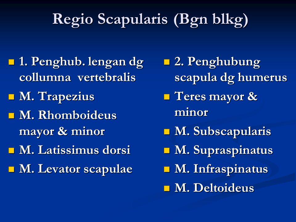 Regio Scapularis (Bgn blkg) 1. Penghub. lengan dg collumna vertebralis 1. Penghub. lengan dg collumna vertebralis M. Trapezius M. Trapezius M. Rhomboi