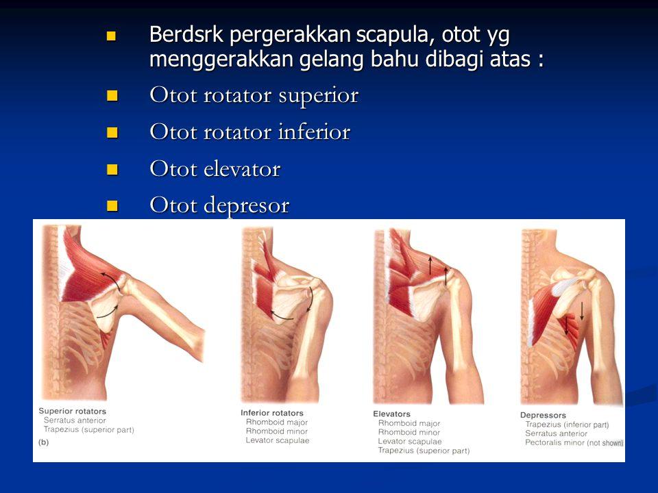 Berdsrk pergerakkan scapula, otot yg menggerakkan gelang bahu dibagi atas : Berdsrk pergerakkan scapula, otot yg menggerakkan gelang bahu dibagi atas