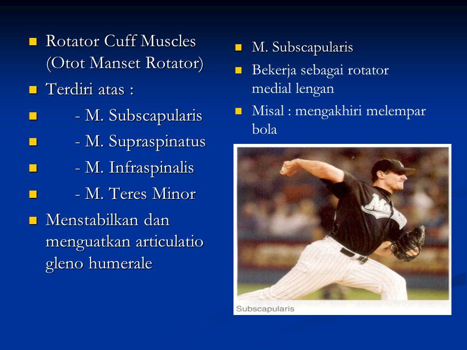 Rotator Cuff Muscles (Otot Manset Rotator) Rotator Cuff Muscles (Otot Manset Rotator) Terdiri atas : Terdiri atas : - M. Subscapularis - M. Subscapula