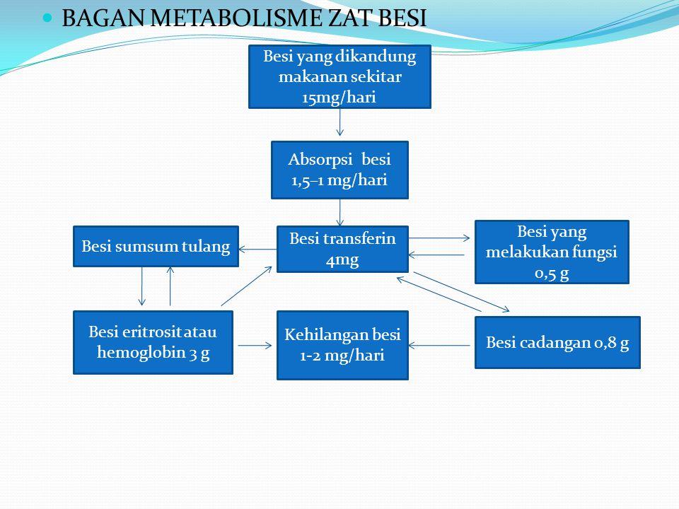 BAGAN METABOLISME ZAT BESI Besi yang dikandung makanan sekitar 15mg/hari Absorpsi besi 1,5–1 mg/hari Besi transferin 4mg Besi sumsum tulang Besi eritrosit atau hemoglobin 3 g Kehilangan besi 1-2 mg/hari Besi yang melakukan fungsi 0,5 g Besi cadangan 0,8 g