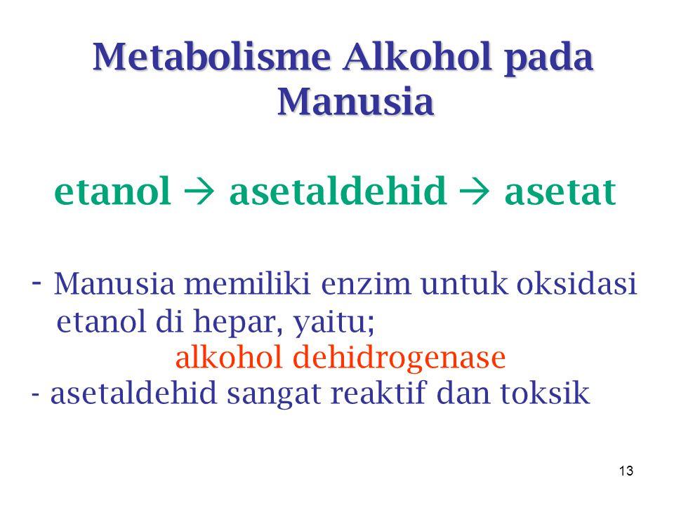 13 Metabolisme Alkohol pada Manusia etanol  asetaldehid  asetat - Manusia memiliki enzim untuk oksidasi etanol di hepar, yaitu; alkohol dehidrogenase - asetaldehid sangat reaktif dan toksik