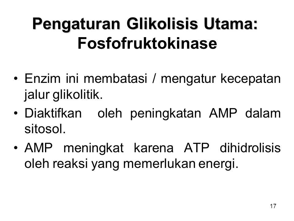 17 Pengaturan Glikolisis Utama: Pengaturan Glikolisis Utama: Fosfofruktokinase Enzim ini membatasi / mengatur kecepatan jalur glikolitik.