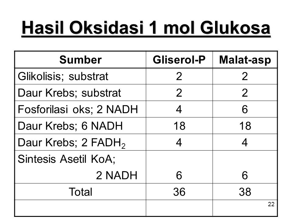 22 Hasil Oksidasi 1 mol Glukosa SumberGliserol-PMalat-asp Glikolisis; substrat22 Daur Krebs; substrat22 Fosforilasi oks; 2 NADH46 Daur Krebs; 6 NADH18 Daur Krebs; 2 FADH 2 44 Sintesis Asetil KoA; 2 NADH66 Total3638