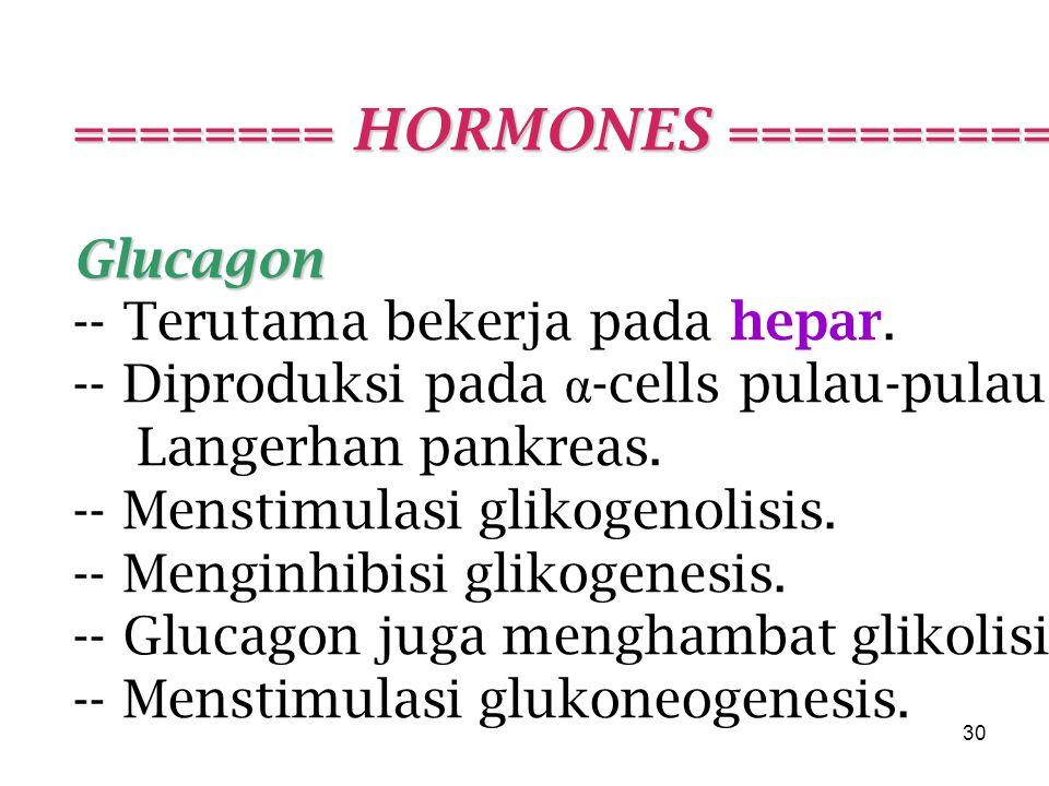 30 ======== HORMONES =========== Glucagon -- Terutama bekerja pada hepar.