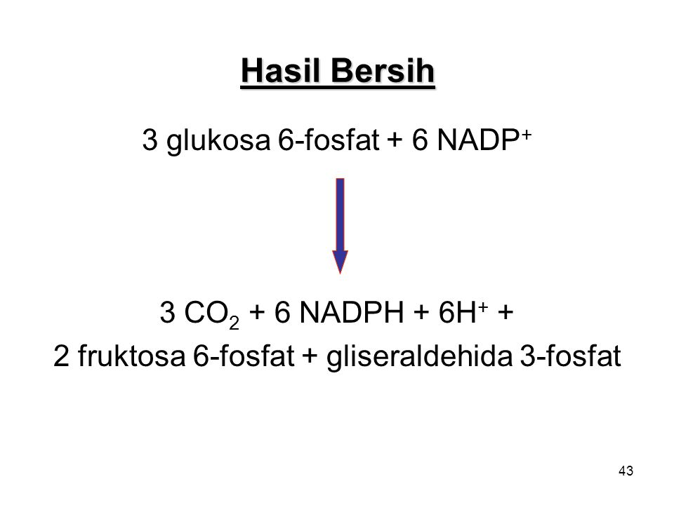 43 Hasil Bersih 3 glukosa 6-fosfat + 6 NADP + 3 CO 2 + 6 NADPH + 6H + + 2 fruktosa 6-fosfat + gliseraldehida 3-fosfat