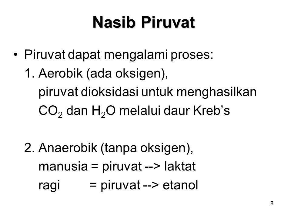 19 Hasil Bersih Glikolisis Aerob Glukosa + 2NAD + + 2Pi + 2 ADP 2Piruvat + 2NADH + 4H + + 2ATP + 2H 2 O