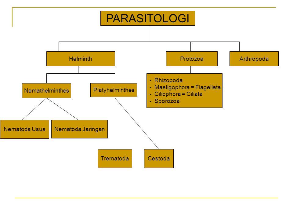 Epidemiologi Soil Transmitted Helminths Pola penyebaran hampir sama antara :  A.
