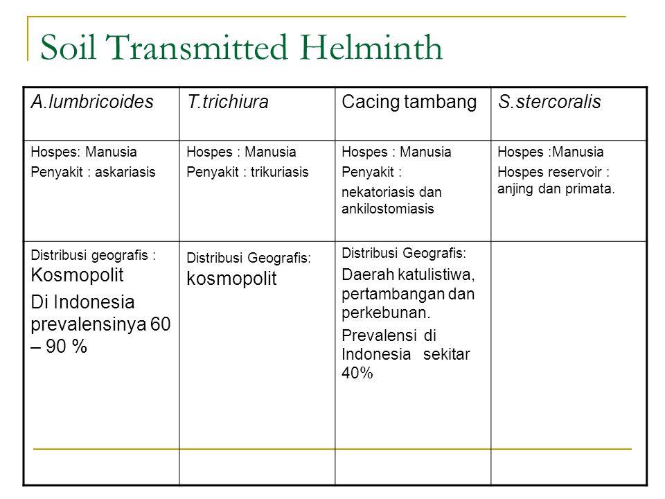 Soil Transmitted Helminth A.lumbricoidesT.trichiuraCacing tambangS.stercoralis Hospes: Manusia Penyakit : askariasis Hospes : Manusia Penyakit : triku