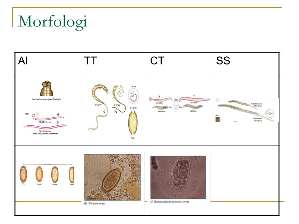 Non soil transmitted helminth Enterobius(Oxyuris) vermicularis (cacing keremi)  Hospes : Manusia  Penyakit : Enterobiasis  Penyebaran Geografik : kosmopolit, daerah dingin > daerah panas.