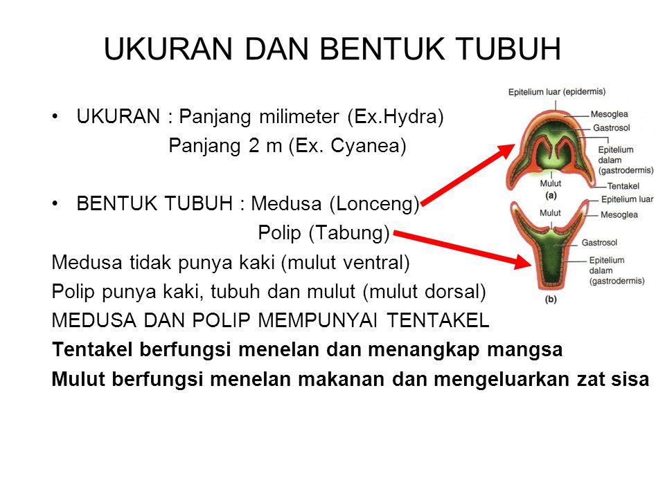 UKURAN DAN BENTUK TUBUH UKURAN : Panjang milimeter (Ex.Hydra) Panjang 2 m (Ex. Cyanea) BENTUK TUBUH : Medusa (Lonceng) Polip (Tabung) Medusa tidak pun