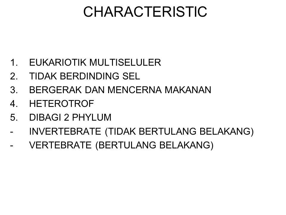 CHARACTERISTIC 1.EUKARIOTIK MULTISELULER 2.TIDAK BERDINDING SEL 3.BERGERAK DAN MENCERNA MAKANAN 4.HETEROTROF 5.DIBAGI 2 PHYLUM -INVERTEBRATE (TIDAK BE