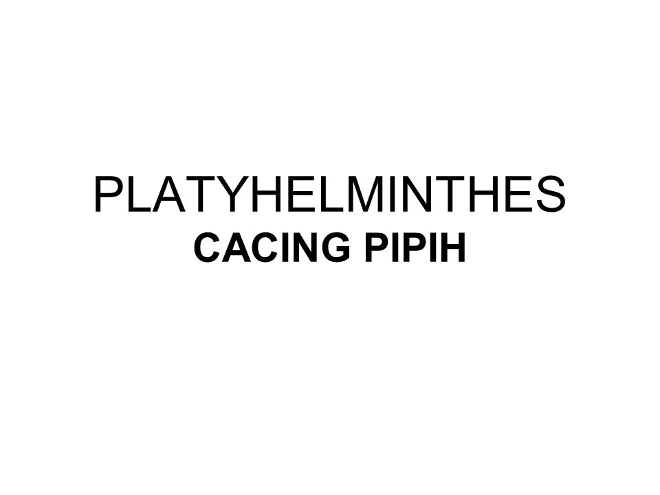 PLATYHELMINTHES CACING PIPIH
