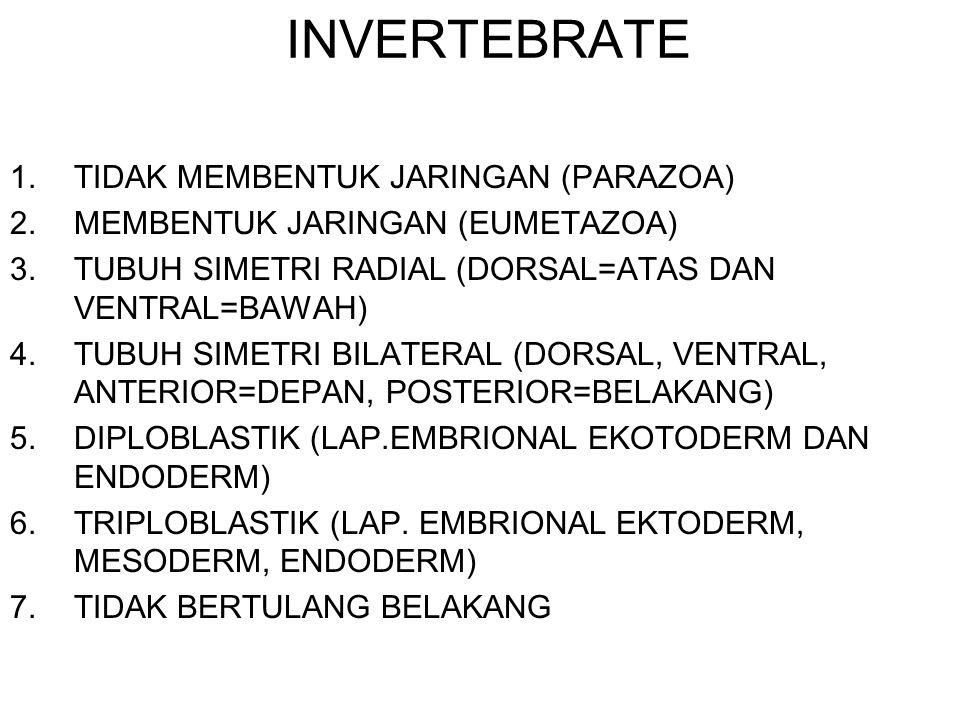 INVERTEBRATE 1.TIDAK MEMBENTUK JARINGAN (PARAZOA) 2.MEMBENTUK JARINGAN (EUMETAZOA) 3.TUBUH SIMETRI RADIAL (DORSAL=ATAS DAN VENTRAL=BAWAH) 4.TUBUH SIME