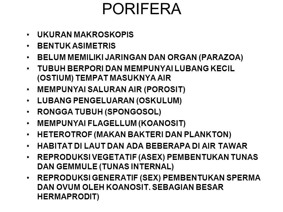 PORIFERA UKURAN MAKROSKOPIS BENTUK ASIMETRIS BELUM MEMILIKI JARINGAN DAN ORGAN (PARAZOA) TUBUH BERPORI DAN MEMPUNYAI LUBANG KECIL (OSTIUM) TEMPAT MASU